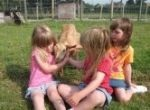 Kids feeding animals at Nettlecombe Farm Isle of Wight